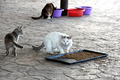 Feeding station. For stray cats in Cyprus. Compassionate people feed the animals and bring water and food Stock Images