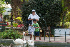 Feeding the swans. A nun and a little boy is feeding the swans with bread Royalty Free Stock Image
