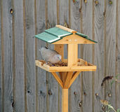Feeding Table Royalty Free Stock Image