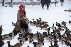 Free Feeding The Ducks Left For The Winter At The Creek Royalty Free Stock Images - 55927959