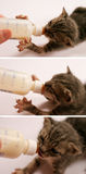 Feeding, three in one. Feeding a two weeks old kitten, using a special bottle. Macro, shallow DOF stock photos