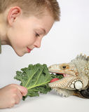 Feeding time. Little boy feeding green leaf food to large hungry pet lizard Stock Photography