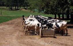 Feeding time Stock Photos