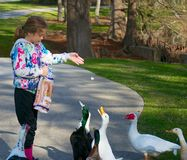 Feeding Time. Young girl feeding a group of ducks at the park Royalty Free Stock Photos