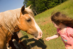 Feeding Time. A little girl feeding a horse some grass Royalty Free Stock Photo