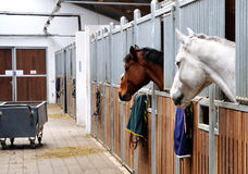 Feeding time for brown and white horse Stock Photos