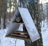 A feeding trough for animals. Squirrel eating nuts in the winter in a cratch Stock Images
