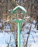 Feeding trough for the birds Royalty Free Stock Photo