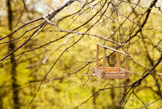 Feeding trough for birds on a tree Royalty Free Stock Image