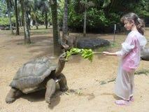 Feeding the turtle stock photography