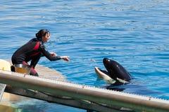 Feeding whales Royalty Free Stock Image