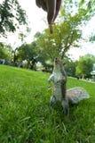 Feeding a wild squirrel Stock Photo