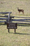 Feeding Wildlife Prohibited Sign with Deer Royalty Free Stock Photos