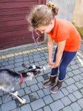 Feeding young goat Stock Photo