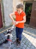 Feeding young goat Stock Image