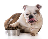 Feeding your pet Stock Images