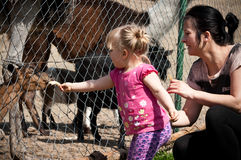 Feeding zoo animals. Mother and baby girl feeding zoo animals Royalty Free Stock Images