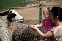 Feeding zoo llama. Mother with little daughter feeding a llama in a zoo Royalty Free Stock Photography