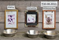 Feedingbowls for dogs Stock Photography