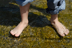 Feedt in the water. Naked feet in the water Stock Photography