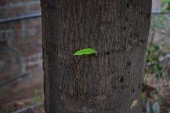 Leaf on tree. Feel aloneness one leaf on tree royalty free stock image
