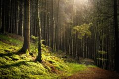 Feel the Forest Royalty Free Stock Photography