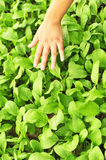 Feel green vegetable Royalty Free Stock Photos