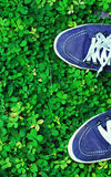 Step on green grass. Feel the nature and step at green and fresh grass Royalty Free Stock Photo