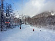 Feel powder snow in Niseko stock photography