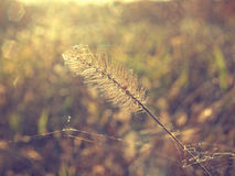 Feel the vibe. Close-up of single straw against the sun Stock Photos