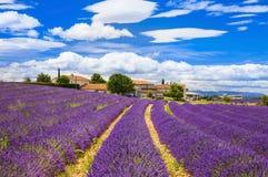 Feelds av blommande lavander, Valensole, Provence, Frankrike, Europa Royaltyfria Bilder