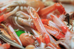 Feelers of prawn Royalty Free Stock Images
