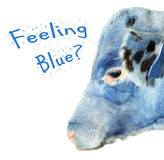 Feeling blue calf Royalty Free Stock Photo