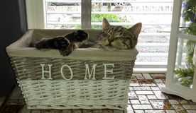 Cat feeling home sleeping in basket Royalty Free Stock Photo