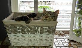 Cat feeling home sleeping in basket. Cat sleeping in basket Royalty Free Stock Photo
