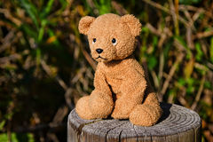 Feeling A Little Stumped. Stuffed teddy bear on a tree stump in outdoor natural light Stock Images