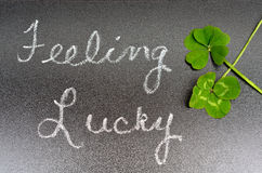 Feeling lucky concept sign, 5 five leaf and 4 leaf clover Royalty Free Stock Image