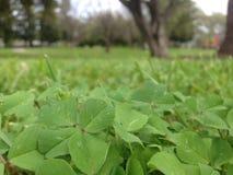 Feeling lucky?. Green is all around Stock Photos