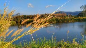 Feeling natures Lakeview Royalty Free Stock Photo