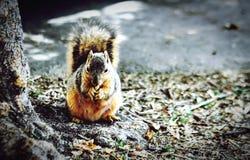 Feeling Squirly Stock Photo