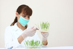 A feemale laboratory assistant Royalty Free Stock Photo