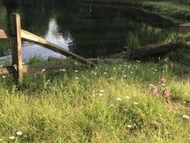 Feence в винограднике Стоковое Изображение RF