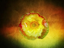 Feenhafte Blume Stockfoto
