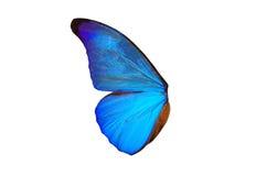 Feenhafte Flügel Lizenzfreie Stockfotografie