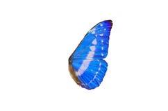 Feenhafte Flügel Stockfoto