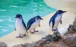 Feenhafte Pinguine Lizenzfreies Stockfoto