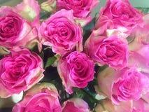 Feenhafte schöne Blumen genannt die Rose Stockfoto