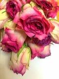 Feenhafte schöne Blumen genannt die Rose Lizenzfreie Stockbilder