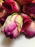 Feenhafte schöne Blumen genannt die Rose Stockbild