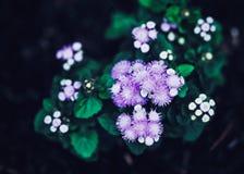 Feenhafte träumerische magische purpurrote Blumen mit den hellgrünen Blättern, getont mit instagram filtert im Retro- Weinleseart Stockfoto
